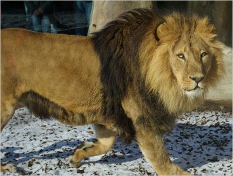 Der Tiergarten Schönbrunn bietet jede Menge faszinierende Tiere